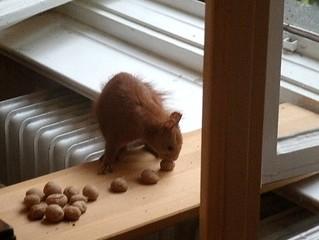Eichhörnchen mag keine Grissinikekse 3
