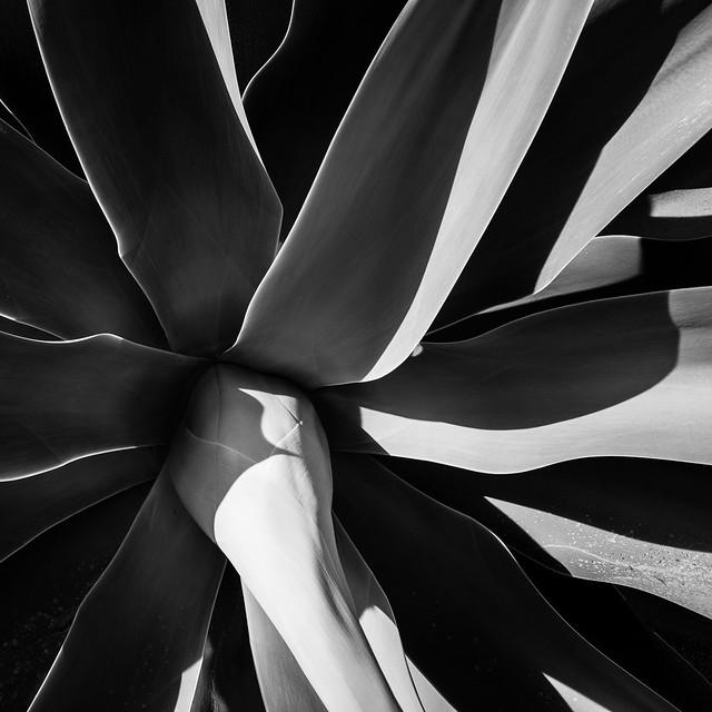 Succulent 2 (RAW)