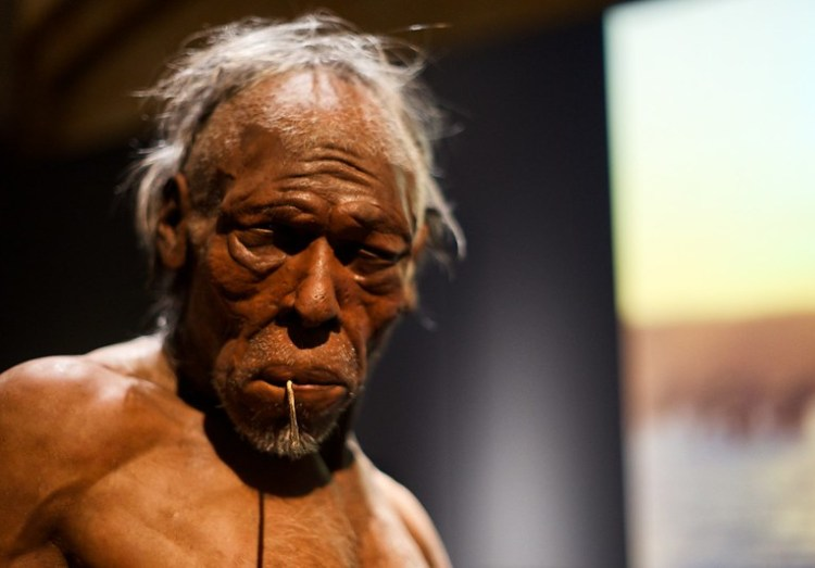 13808860813_237cd39ca0_c The Distinctive Facial Differences Between Archaic Neanderthals and Modern Humans Random