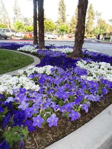 flowers lynn kelley author