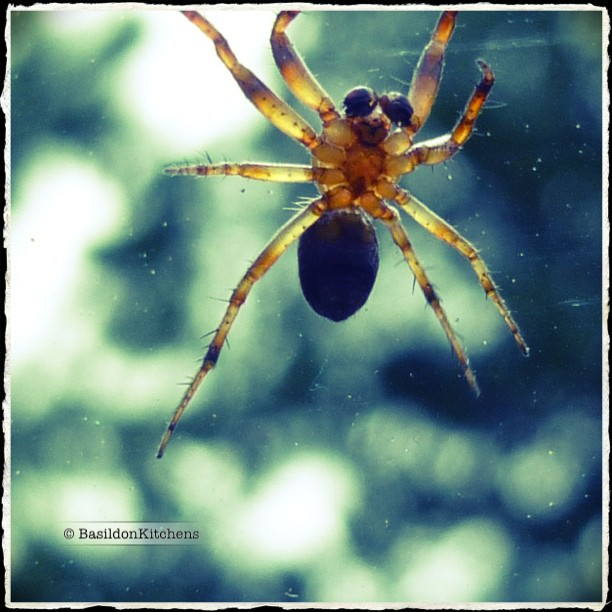 June 22 - frightful {I really don't like creepy & crawly things; this guy was on the OTHER side of the car windshield} #TitleFx #frightful #photoaday #spider #phobia #yuck