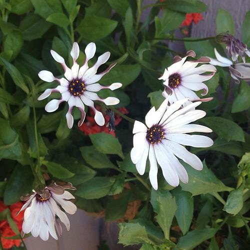 Love summer's flowers by @MySoDotCom