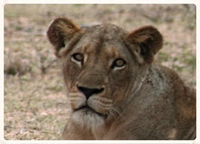 Kruger (3)