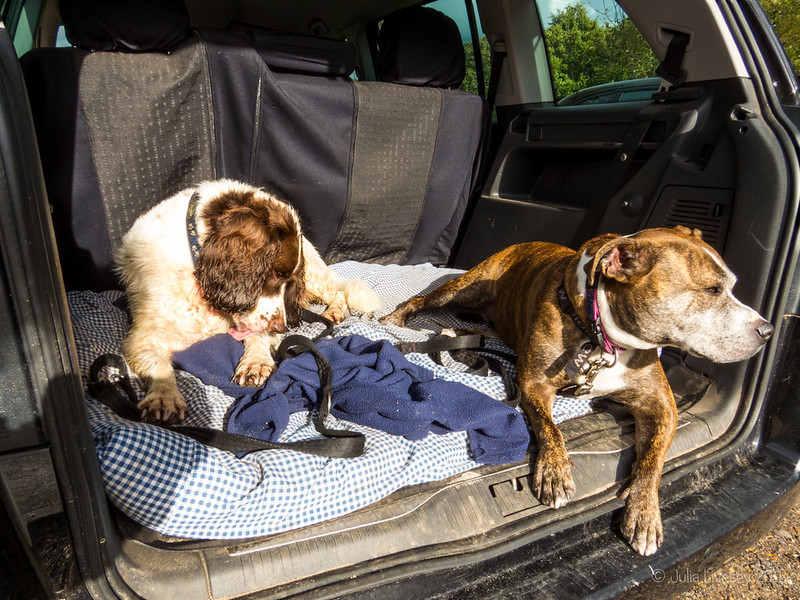 Chilaxing in the car at the end of their walk