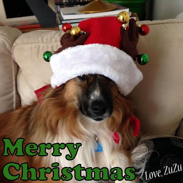 Christmas Zu
