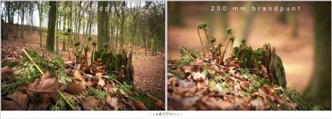 Ultra groothoek laat het hele bos zien, terwijl een tele objectief het onderwerp eruit laat springen. De achtergrond blijft echter het gevoel van het bos houden, wat nog duidelijker kan worden bij een grotere scherptediepte.