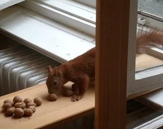 Eichhörnchen mag keine Grissinikekse 1