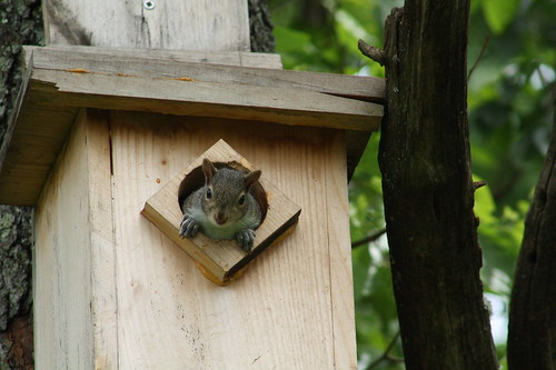 Knock, Knock. Whoooo's There?