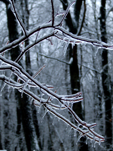 ice fangs 2