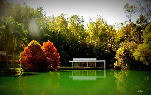 Um dos lagos do Inhotim