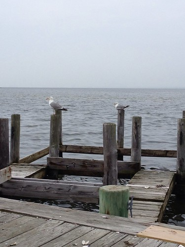 Seagulls on the dock