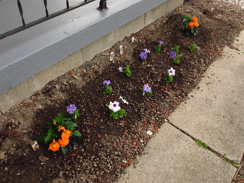 flower bed in front of the house 2