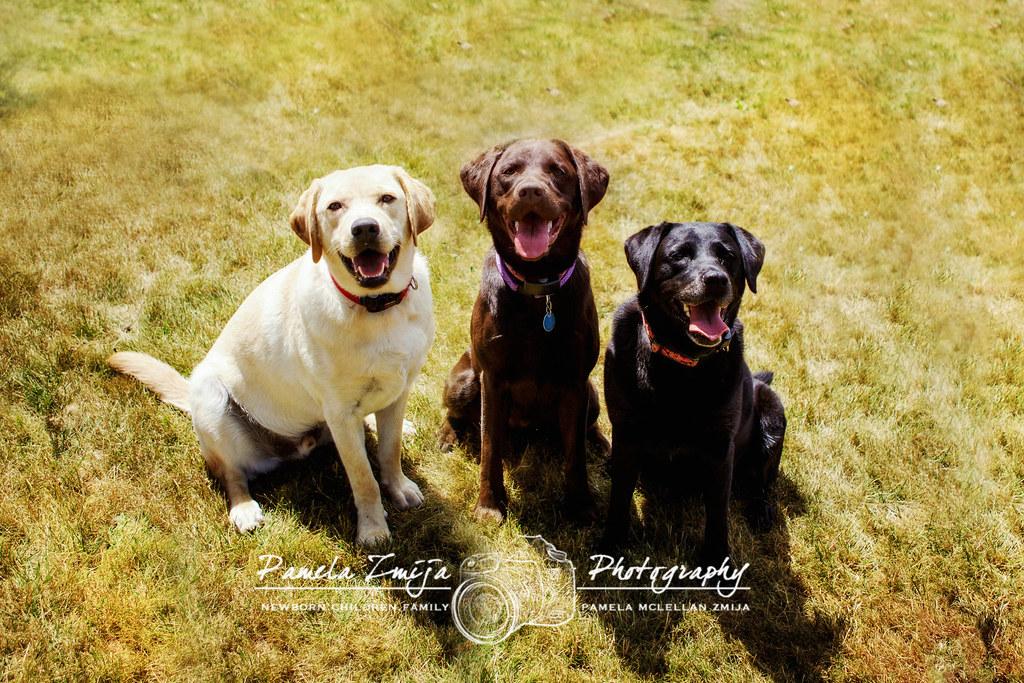 DOGS 20120708-328C2760 12X8-WM