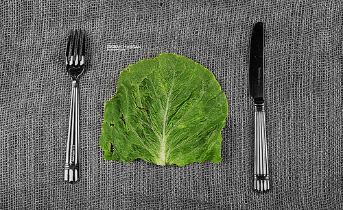 Lettuce by SABU7A