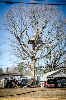 Gaffney Treehouse-002
