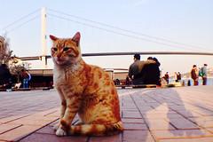 Cool ortaköy mini Leopard (-:D