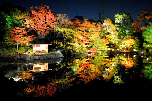 Shirotori Fall Lightup 052r