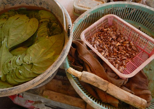 betel leaves left, and areca nuts right, ready for the classic preparation of paan