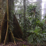 07 Viajefilos en Australia. Dorrigo Rainforest NP 26