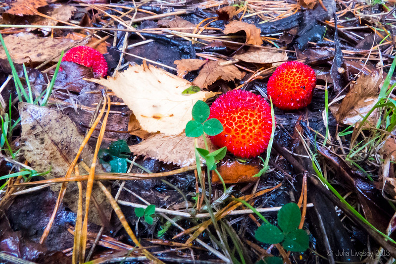 Fruit from the Strawberry Tree