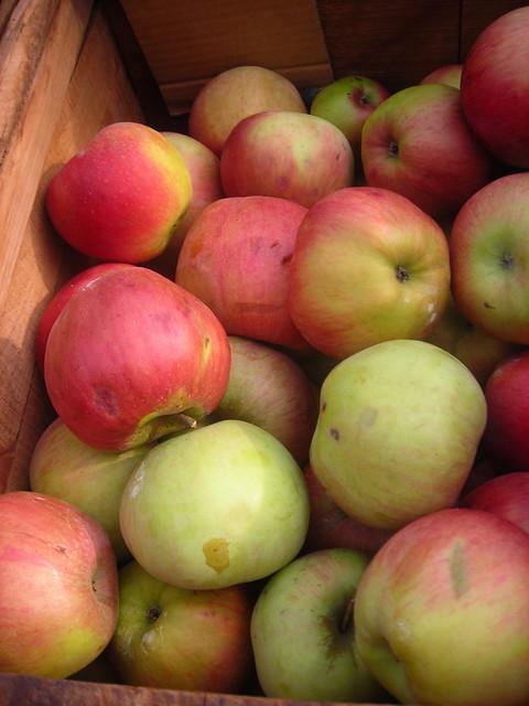 Red Spy apples