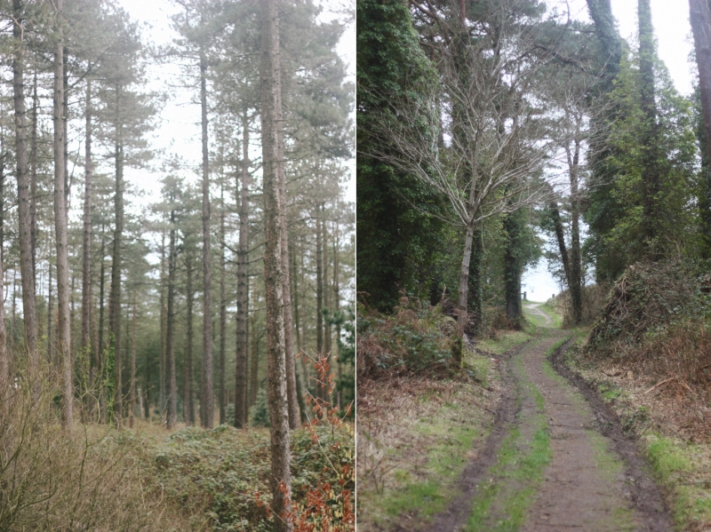 pine forest + path to the sea raven reserve