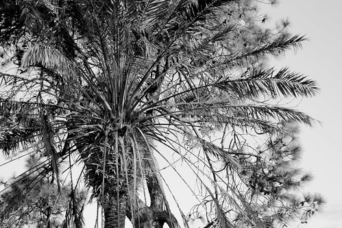 IMG 1747.1bw Palm me off!