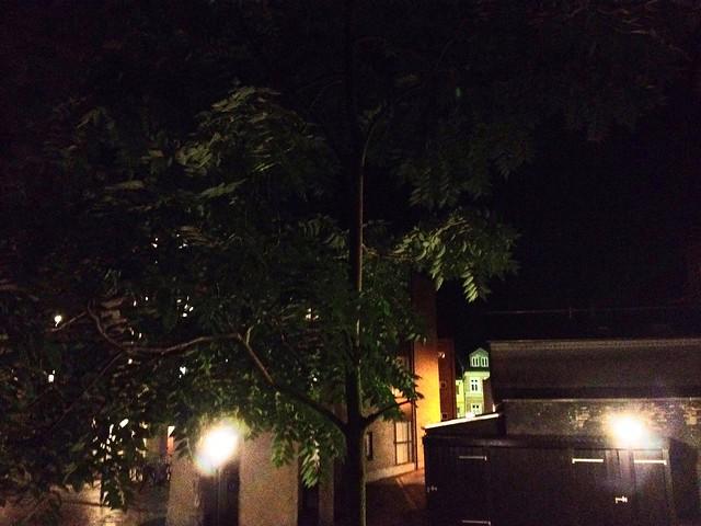 Leaves at night (Leafy)