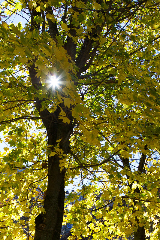 Autumn street. Lviv, Ukraine