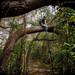 Tree Canopy Hiking