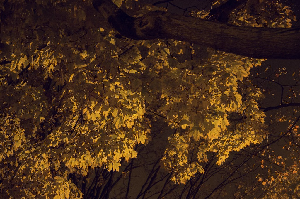 Yellow leaves at Night