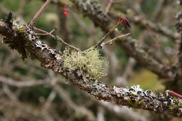 Lichen, Lichen, Moss