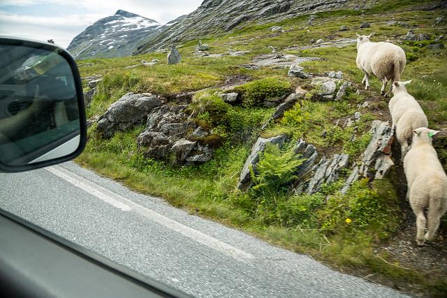 Roadtrip til Kristiansund #041