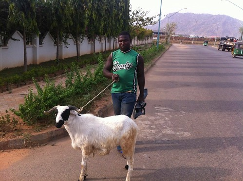 Walking His Ram - Galadima FCT. by Jujufilms