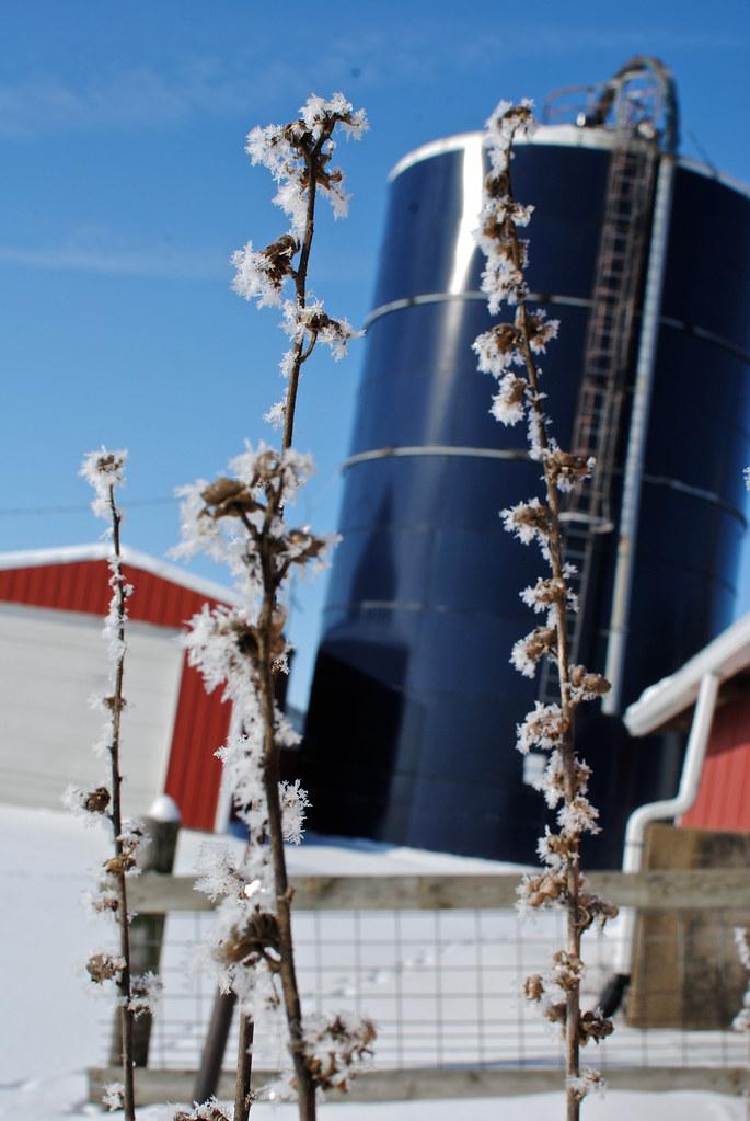 Frosty Morning in Iowa
