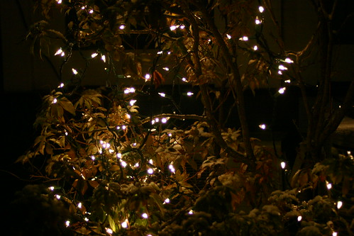 holiday light bush