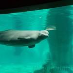 Oceanografic Miguel, focas 03