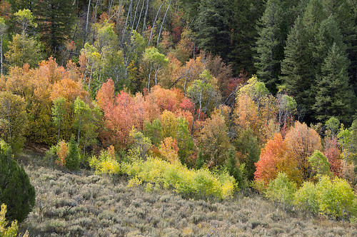 Logan Canyon 4