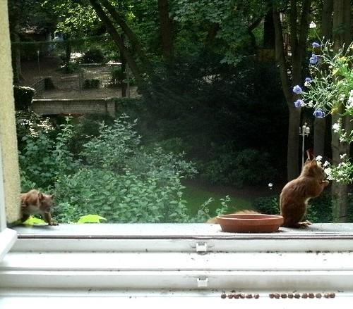 Eichhörnchen 5.2