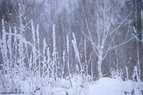 Advent | 5. Winter wonderland
