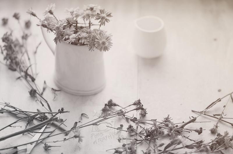 Day 355.365 –  Flowers Arragement WIP