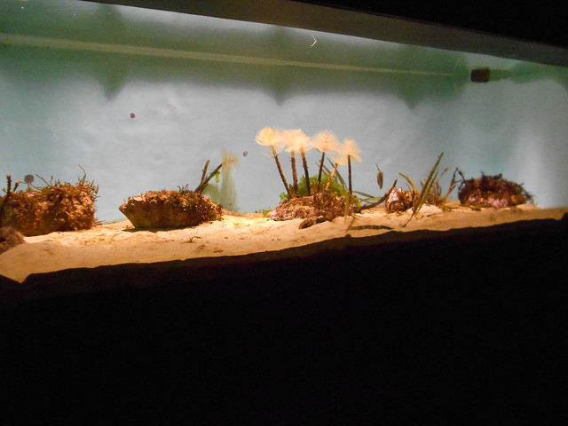 museo marítimo cantábrico