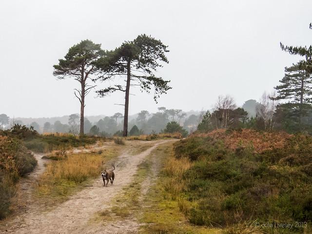 Jez wanders along the path