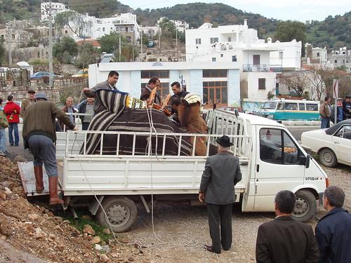 200601010008_camel_arriving