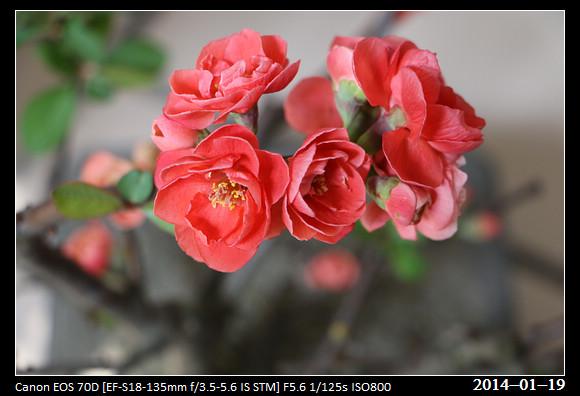20140119_Flowers