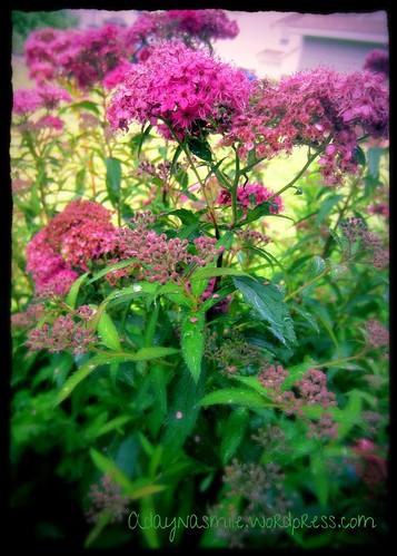 My flowers 2