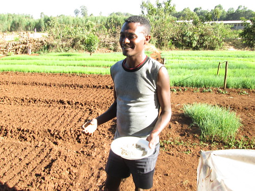 A young entrepreneur in Mecha district  at his vegetable seedling nursary (Photo: ILRI\ Yigzaw Dessalegne)