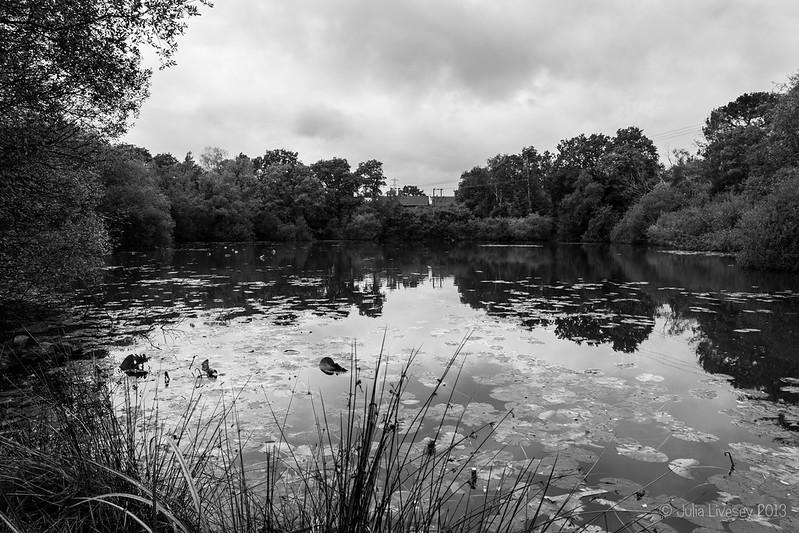 Creekmoor Ponds, looking west