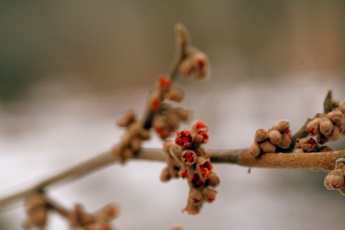 138/365 - Cold Twigs