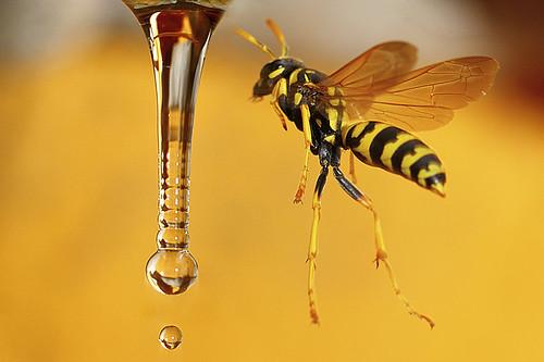 GUÊPE SURPRISE ! wasp in weightless flight
